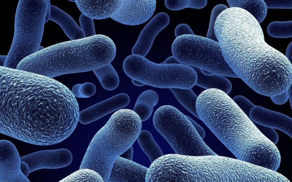 Простейшие бактерии