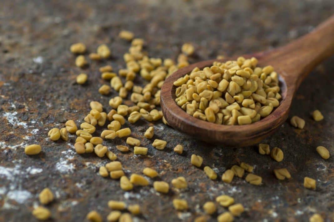 Семена пажитника для лечения кашля