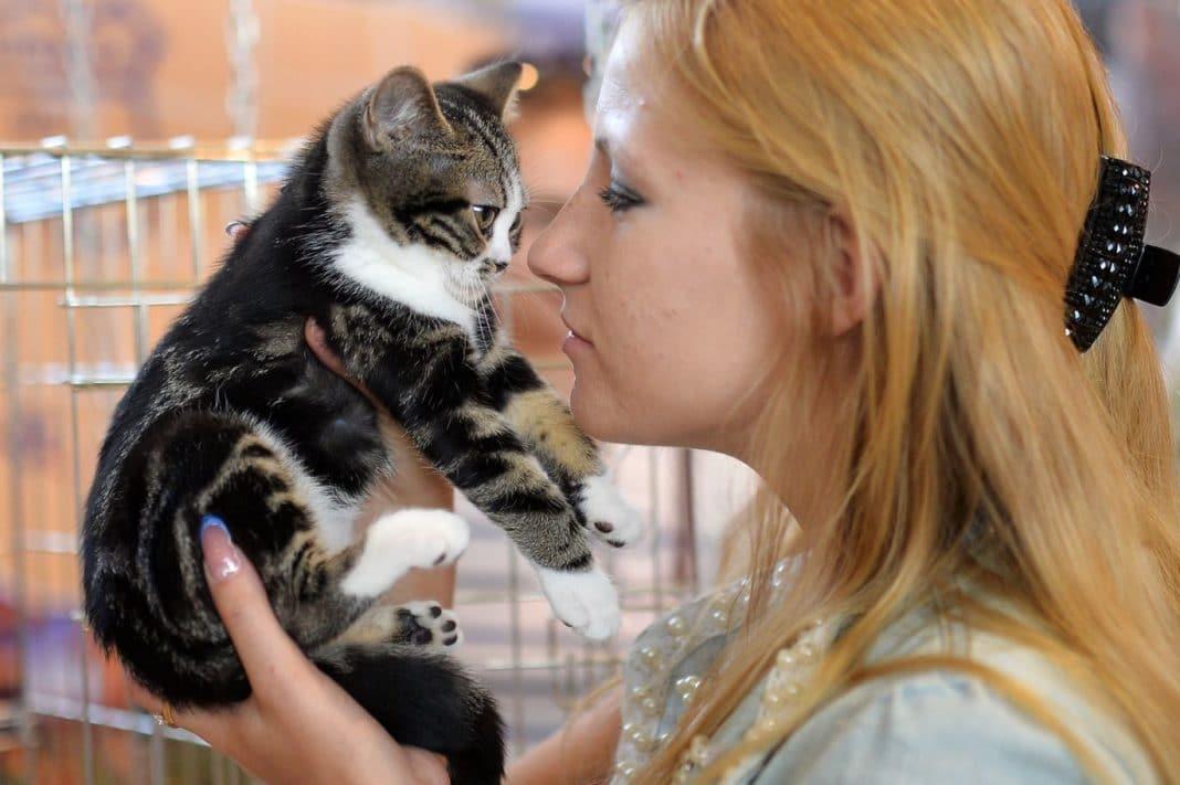 Отечественные медики готовятся презентовать вакцину от аллергии на кошек в 2019 году