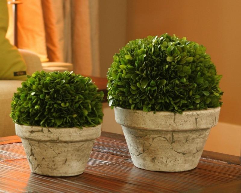 7 растений, способных вытягивать лишнюю влагу из воздуха