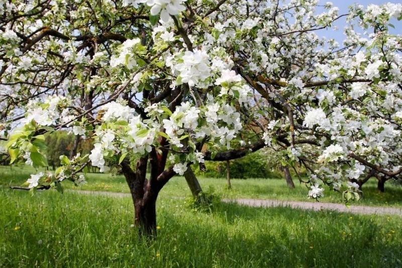 Как защитить себя от пыльцы в воздухе и уменьшить приступы сезонной аллергии