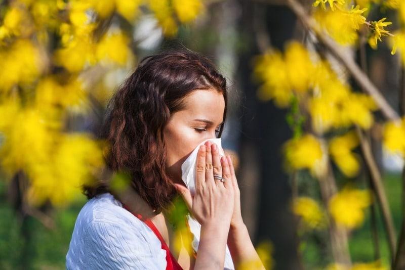 Ученые опасаются, что тополиный пух может разносить COVID-19