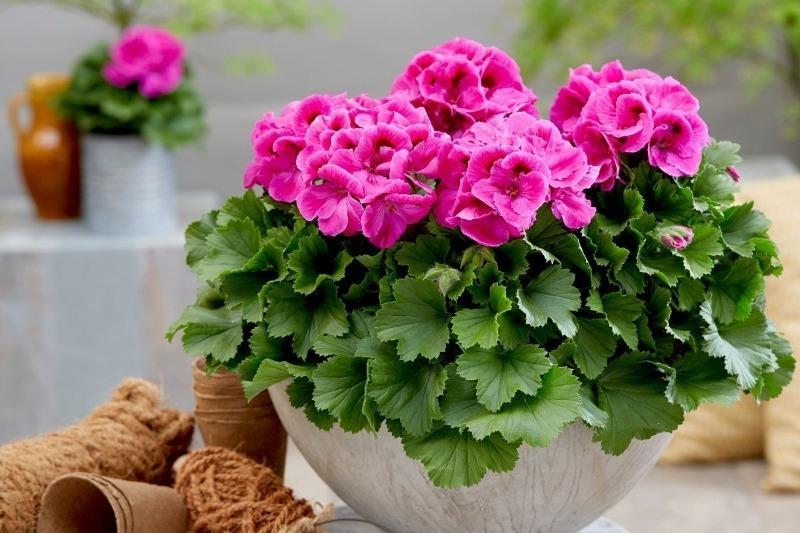 Дышится легко: 8 домашних растений, которые отдают в воздух больше всего кислорода