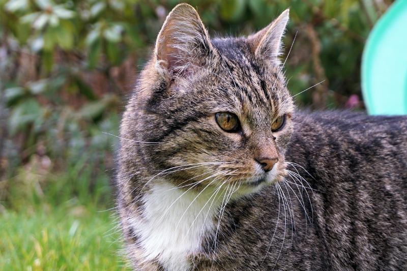 Ученые доказали, что кошки могут заражать друг друга коронавирусом