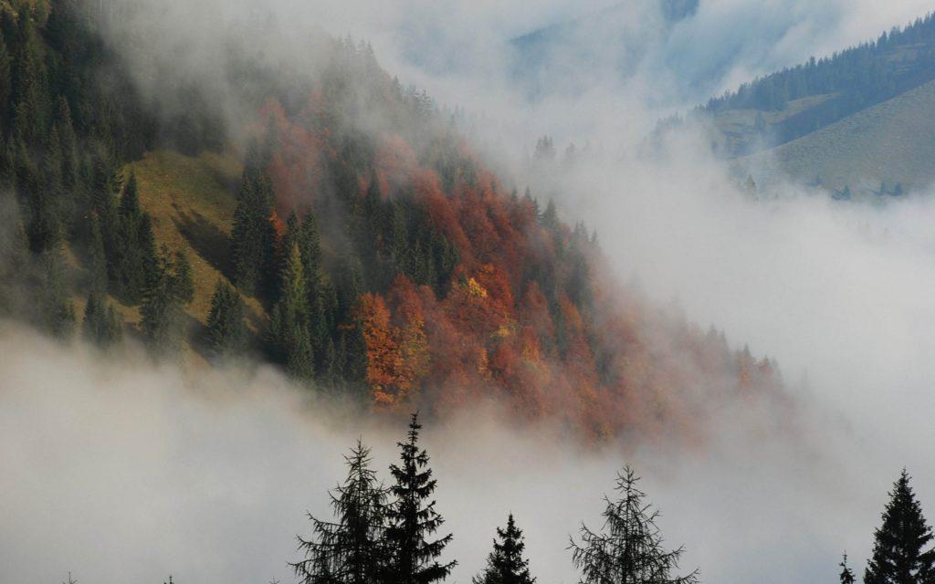 Туманные леса с повышенной влажностью