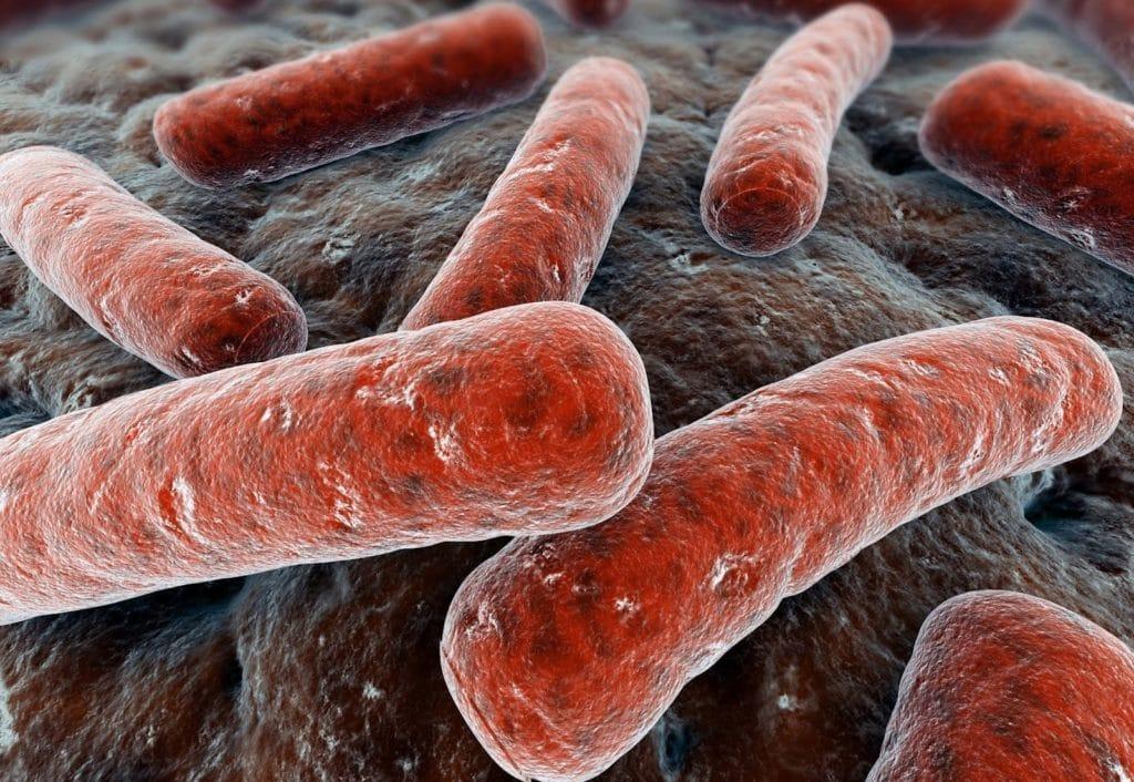 Бактерия африканского туберкулёза
