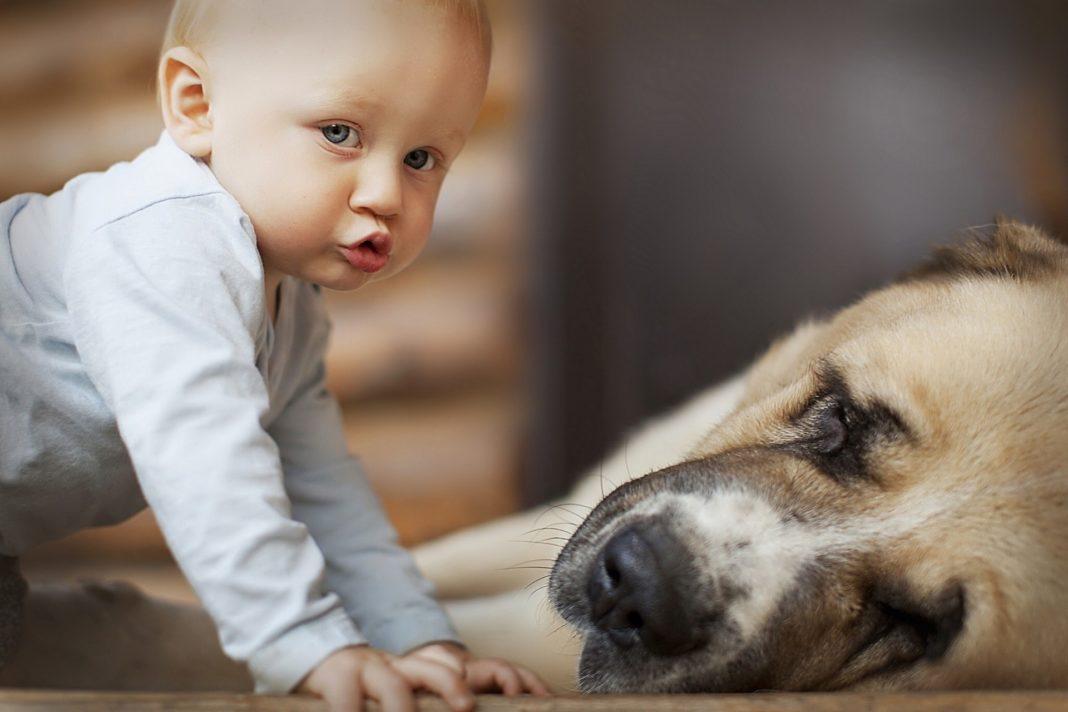 Астма детям не страшна, если в доме есть собака
